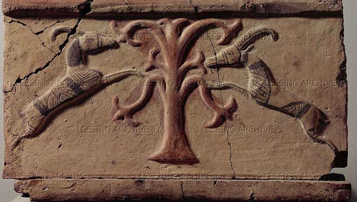 Photo of Hayat ağacının sırrı