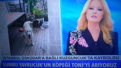 Photo of Müge Anlı ünlü oyuncunun köpeği için çağrıda bulundu